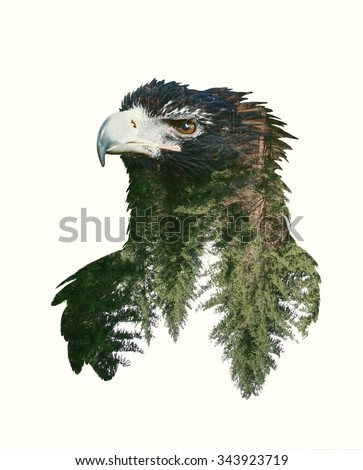 Double Exposure Portrait of Eagle and Green Forest - stock photo