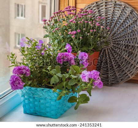 Double petunia in a basket on the balcony window - stock photo