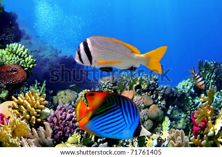 Doublebar bream and Threadfin butterflyfish - stock photo