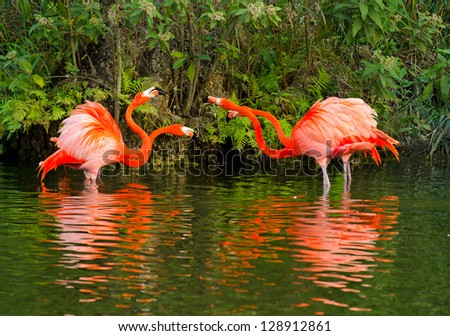 Doubles Match - Angry Birds / Flamingos - stock photo