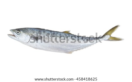 Doublespotted queenfish or talang isolated on the white background