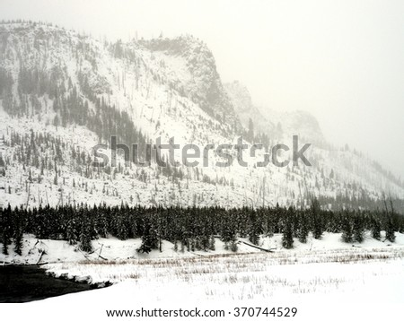 Douglas Fir and lodge pole pine covered with snow in Yellowstone National Park - stock photo