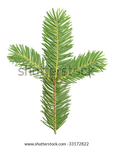 Douglas Fir Branch isolated