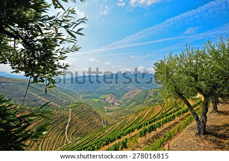 Douro Valley: Vineyards and olive trees near Pinhao, Portugal  - stock photo