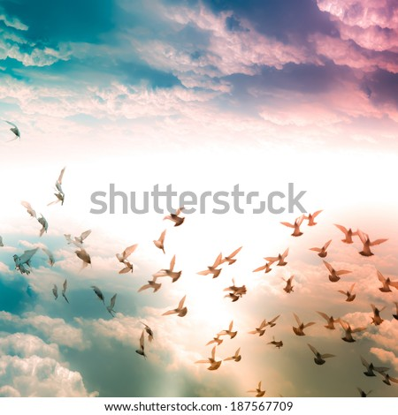 dove flying freedom concept - stock photo