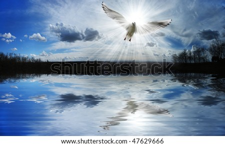 Dove flying in front of the sun - stock photo