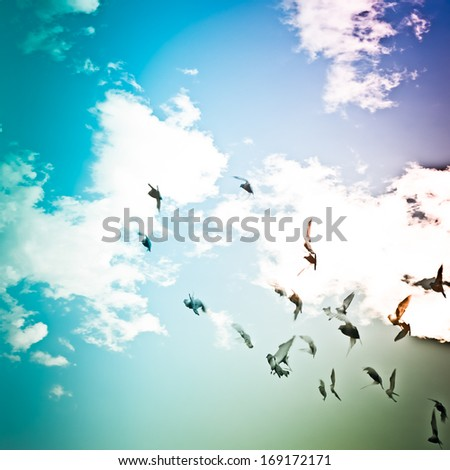 dove flying on blue sky freedom concept background