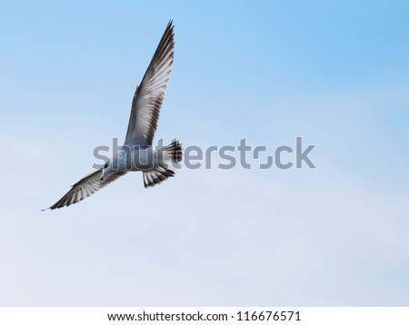 Dove Flying with Blue Sky Background - stock photo