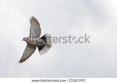 Dove in a white pure sky - stock photo