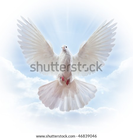 Dove in the air with wings wide open in-front of the sun - stock photo