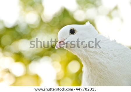 Dove on a branch close-up. Space four text - stock photo