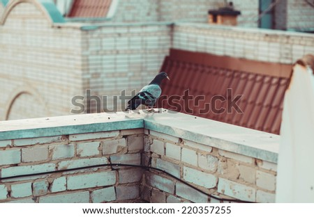 dove on the roof - stock photo