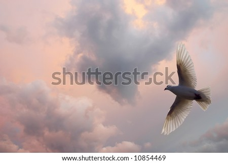 Dove Soaring in a beautiful cloud filled sky. - stock photo
