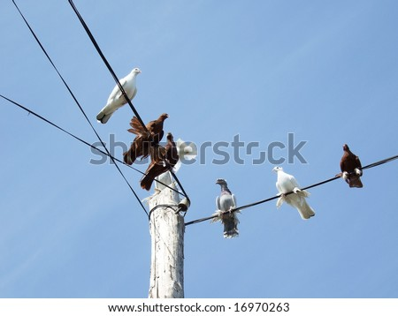 doves sitting on a power lines over sky - stock photo