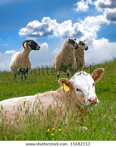 Down On The Farm on a Summers Day - stock photo