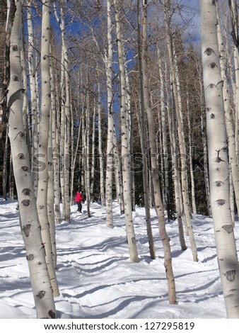 Downhill woman  skier  amid bare winter aspens at  Steamboat Springs, Colorado - stock photo