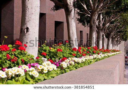 Downtown City Flowers and Trees