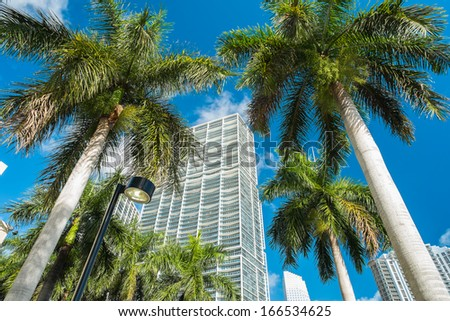 Downtown Miami along Biscayne Bay with condos and palm trees. - stock photo
