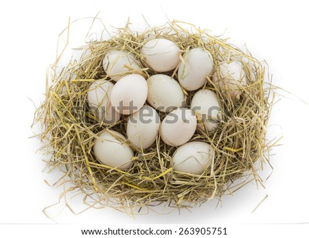 dozen duck egg in nest isolate on white background
