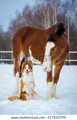 Draft horse and red dog