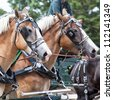 Draft horses in full harness at a country farm fair. - stock photo