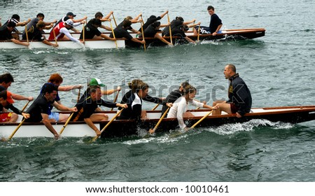 Dragon boat teams racing in Wellington Harbor, New Zealand