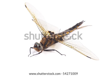 Dragon-fly. Dragonfly sits on a white background - stock photo