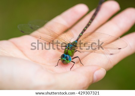 dragon fly on hand