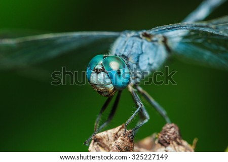 Dragonflies, insects, animals, nature, macro Dragonfly - focus on the eye. - stock photo