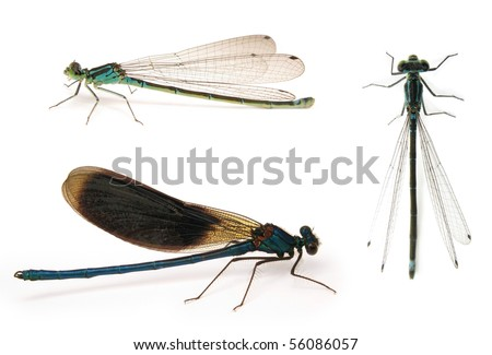 Dragonflies isolated on white - stock photo