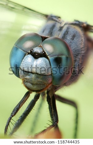 Dragonfly - blue - stock photo