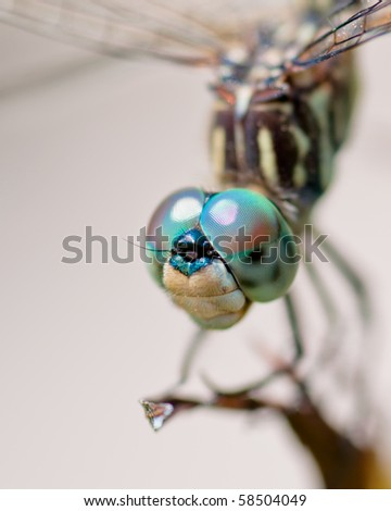 Dragonfly close up - stock photo
