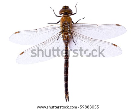 Dragonfly close up isolated on white - stock photo