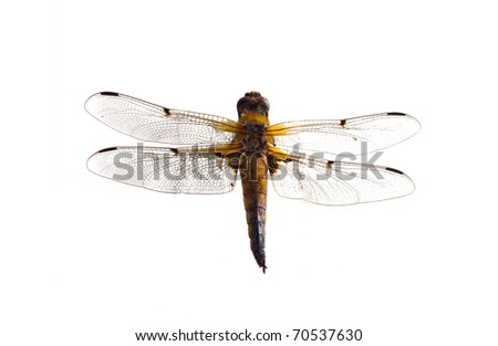 Dragonfly close up on a white background - stock photo