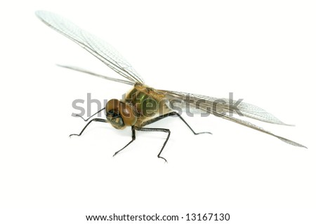 dragonfly (Cordulia aenea) isolated on white background - stock photo