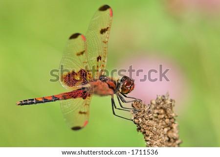 Dragonfly - Damselfly - stock photo