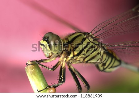 Dragonfly - green - stock photo