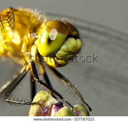 Dragonfly head - stock photo