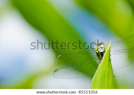 dragonfly in garden or in green nature