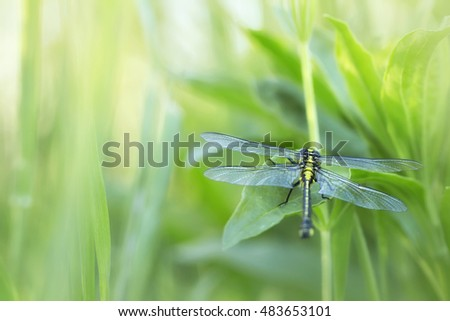 Dragonfly in the grass at sunset accompanies a spring day