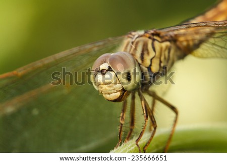 Dragonfly in the outdoors by natural