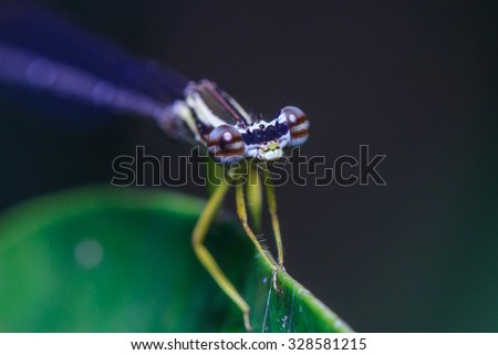 Dragonfly, insect, macro insect, nature, focus on the eyes, the background blur  - stock photo