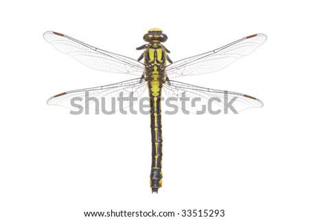 Dragonfly isolated on white background - stock photo