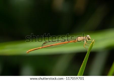 Dragonfly Macro - stock photo