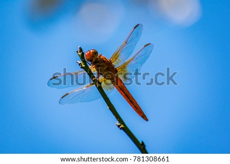 Dragonfly on a blue sky