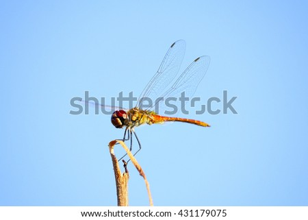 Dragonfly on blurry backgrond:Close up,select focus with shallow depth of field.