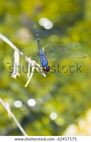 Dragonfly on stem with green background - stock photo