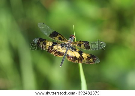 Dragonfly on the nature, Dragonflies of Thailand - stock photo