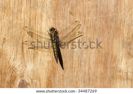 Dragonfly on wooden wall - stock photo