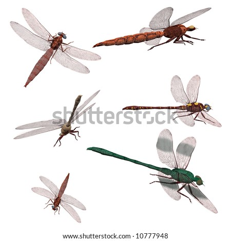 Dragonfly pack - stock photo